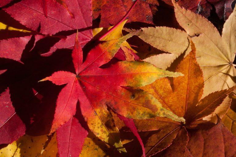 Autumn Unplugged